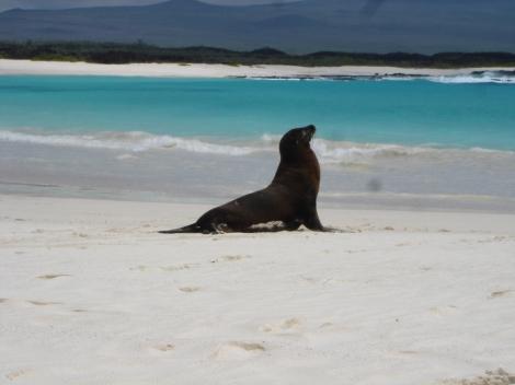 5. postcard perfect sea lion showoff