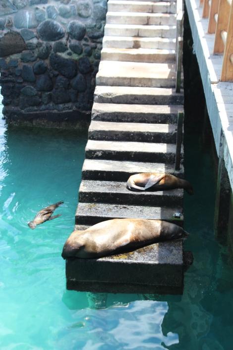 Sea lions sleep all over town